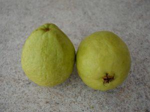 Guava fruit Madagascar